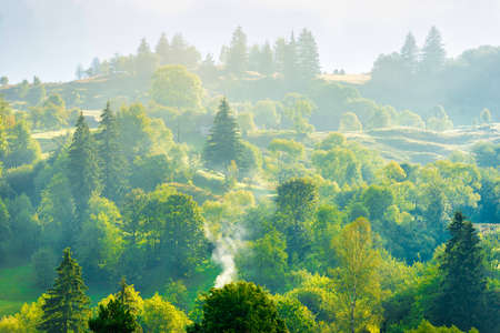 Nature landscape of pasture country hills with fog mist on green trees Banque d'images