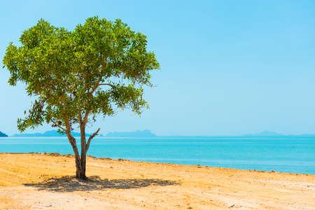 Green tree in desert and landscape with island on blue sea. Thailand, Ko Lanta island