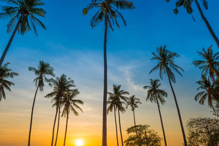 Sunset with palm trees with colorful sunset sky, landscape of palms on island Banque d'images