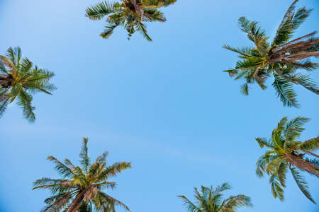 Palm top trees on blue sky as paradise holiday summer nature background