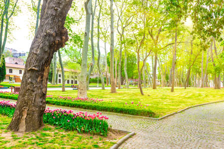 Green park with flowers and path in green spring city park Banque d'images