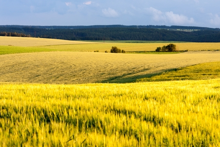 grain fields: Grain fields of South Moravia in summer evening Tinov South Moravian Region Czech Republic. Stock Photo