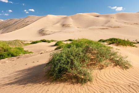 els: Sand dunes Khongoryn Els in Gobi Desert, Umnugovi, South Gobi, Mongolia.