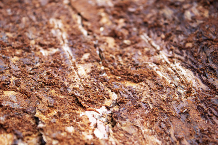 Abstract background of bark beetles moves on dark tree bark Stock Photo