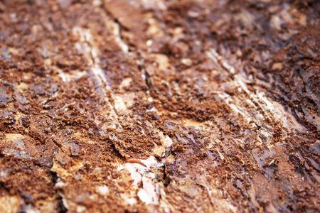 Abstract background of bark beetles moves on dark tree bark 版權商用圖片