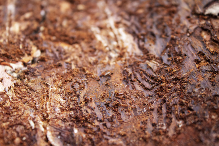 Dirty bark background, close-up