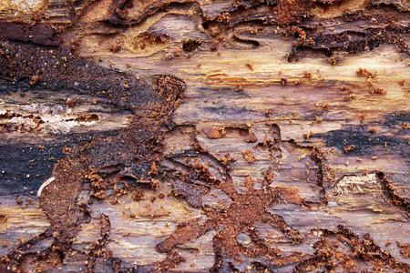 Background moves bark beetle, close-up 版權商用圖片