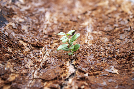 A small plant sprouts in the dirty bark of a tree Stock Photo