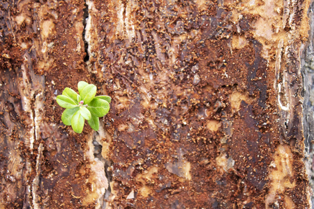 Sprout grows in the bark of a tree