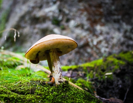 Slugs on a mushroom in the forest