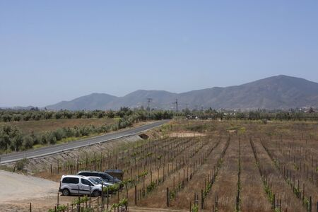 Vineyard by the road in Encenada Baja California Mexico Banco de Imagens