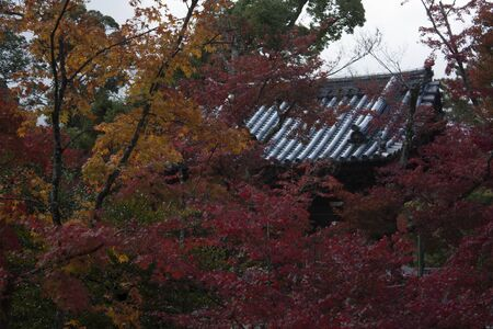 A Japanese roof can be seen in an autumnal atmosphere between red acre leaves Stock Photo