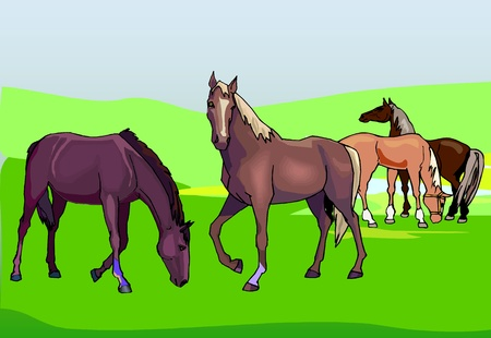 horses on the green pasture  Vector