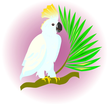 cockatoo sitting on the branch Vector