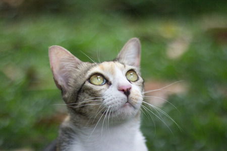 look up: Cat Look Up