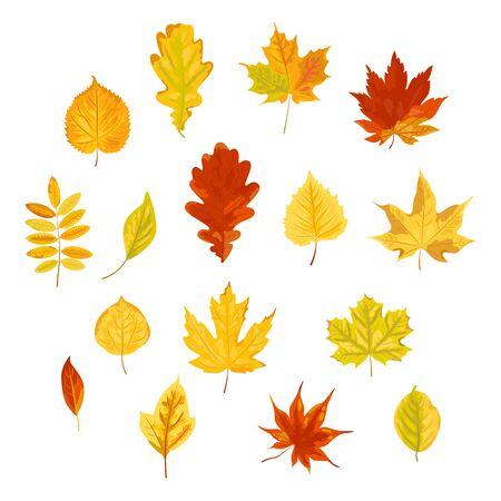 Conjunto de hojas de otoño brillante.