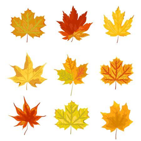 Conjunto de hojas de otoño brillante. Ilustración de vector