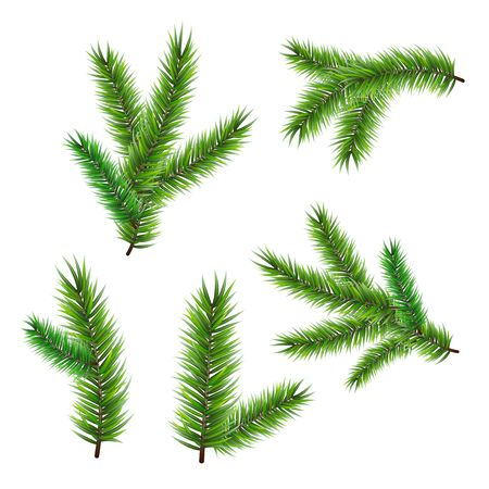 Coniferous twigs set illustration. Elements for Happy New Year and Merry Christmas design. Isolated on white background.