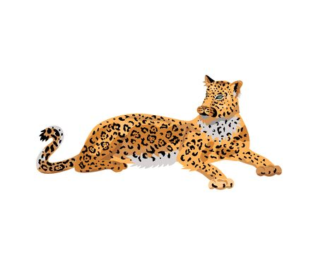 Leopard, wild cat for pattern, design, t-shirt print, sticker. Vector illustration on white background.