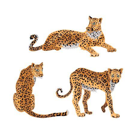 Leopard, wild cat set for pattern, design, t-shirt print, sticker. Vector illustration on white background.
