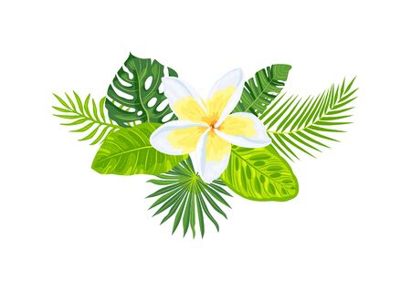 Tropical exotic leaves, plumeria flowers, vector illustration on white background. Design element for poster, web, flyers, invitation, postcard, t-shirt, SPA wedding sticker