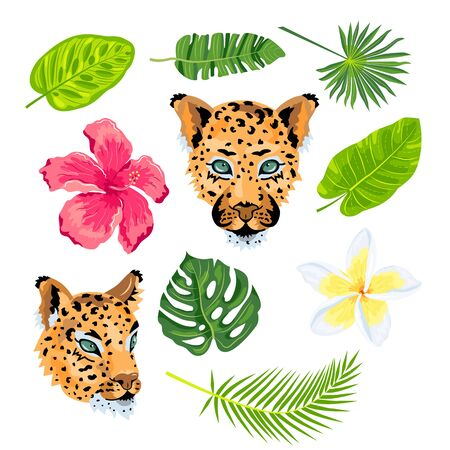 Leopard, tropical leaves, plumeria, exotic flower, hibiscus set. Design for jungle design flyer, poster, t-shirt print, invites, sticker Vector illustration on white background Illusztráció