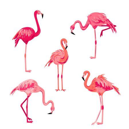 Pink flamingos set vector illustration. Design element isolated on white background.