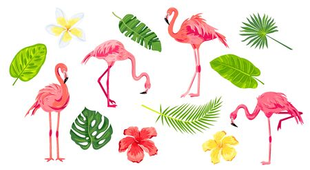 Pink flamingos, tropical leaves and flowers set. Vector illustration. Design elements isolated on white background.