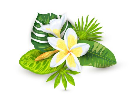Tropical exotic leaves and plumeria flowers with shadows, vector illustration isolated on white background. Design element for poster, web, flyers, invitation, postcard, SPA, sticker, wedding.