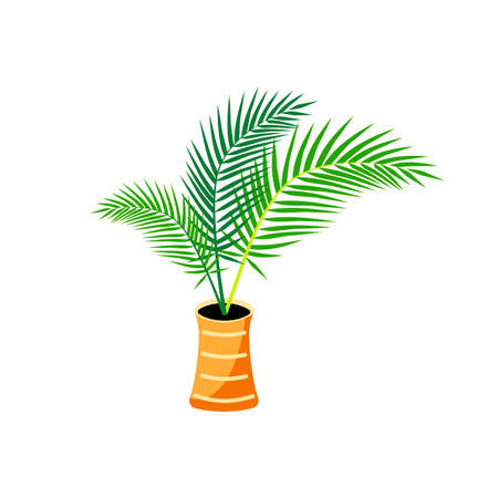Potted plant, palm tree for urban jungle, green home decor. Flat style design. Vector illustration isolated on white background. Ilustrace