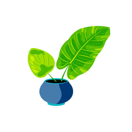Potted plant for urban jungle, green home decor. Flat cartoon style design. Vector illustration isolated on white background. Ilustrace