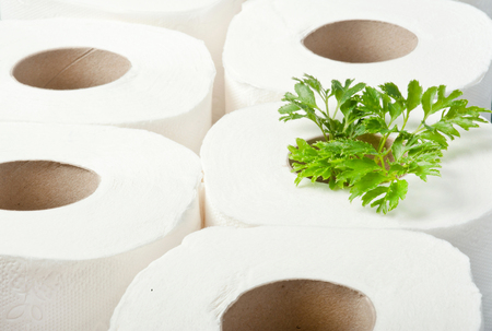 rolls of toilet paper with the plant inside as a seedling tree. Recycling, ecology and conservative concept  Stock Photo