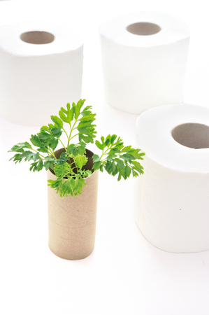 empty rolls of toilet paper with the plant inside as a seedling tree. Recycling, ecology and conservative concept
