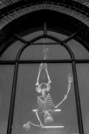 hang body: Skeleton hang on the window