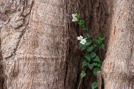 mutualism: Climber with flower growing in the tree