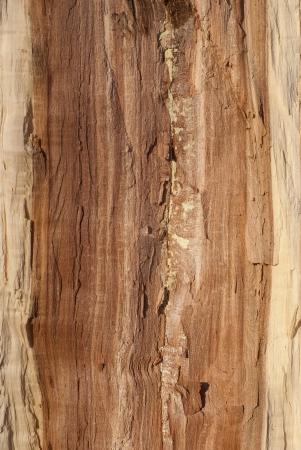 half cut: Oak log core half cut as background Stock Photo