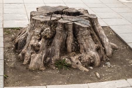 Tree stump on street pavement as environmental problem