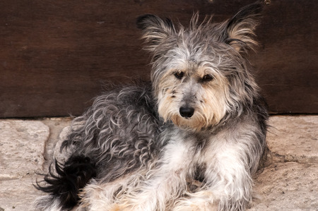 likeable: Likeable shaggy stray dog on stone pavement Stock Photo