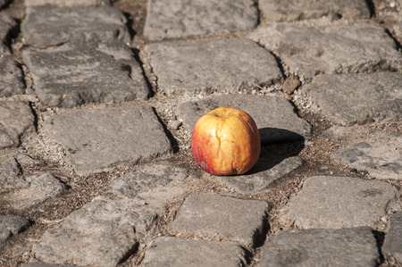 withered: Withered apple on grunge street stone paving