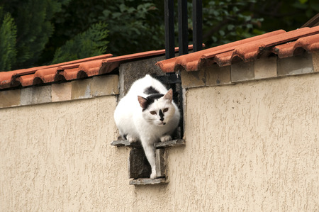 the watcher: Male cat sitting on house garden wall
