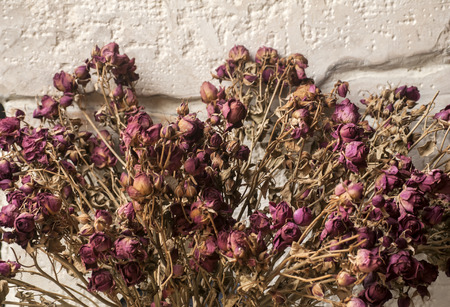 dried flower arrangement: Bouquet of dried pink colored roses closeup