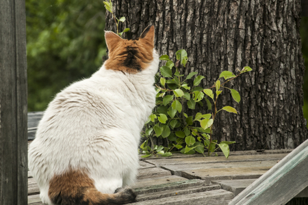 rustic: Cat sitting on rustic porch in garden Stock Photo