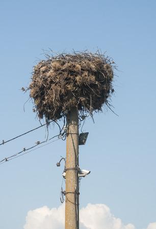 monogamous: Stork nest done on power pole on blue sky background