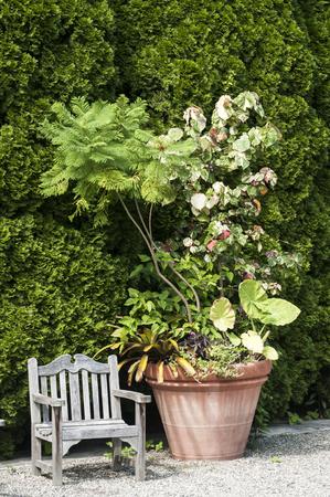 big flower: Wooden vintage chair and big flower pot in garden courtyard
