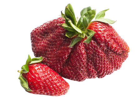 Huge and normal red fresh strawberry closeup isolated on white background