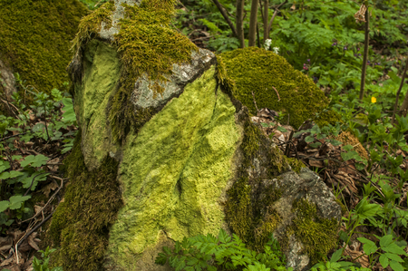 Stone in springtime mountain forest covered with fresh green moss as natural background Stock Photo