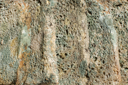 Moldy slices of whole-grain bread closeup as rotten food background