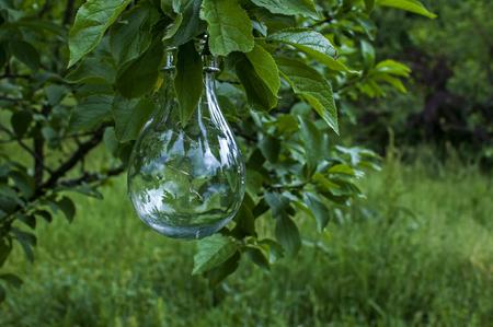 Solar light bulb hanging on tree  branch in green house garden Фото со стока