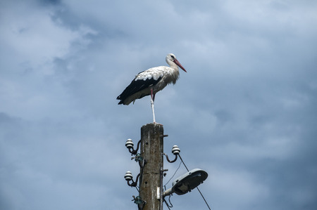 White stork perched on old power pole on cloudy blue sky background 스톡 콘텐츠