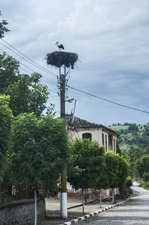 White stork in a nest on street electric pole in small country town on blue cloudy sky background